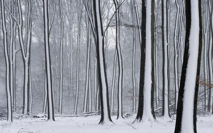 Kar Yagisi Sonrasi Medyana Gelen Ilginc Resimler 9
