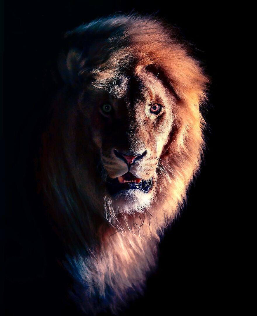 Yabani Aslan 10